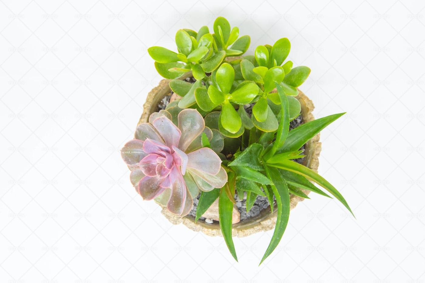 Pot Of Succulents: Stock Photos