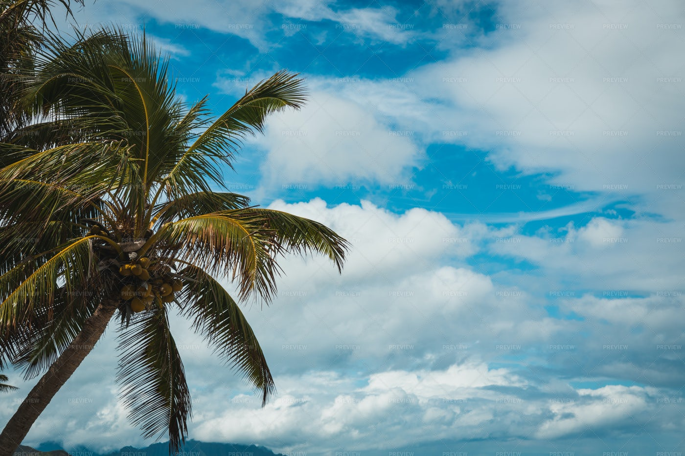 Palm Trees In Paradise: Stock Photos