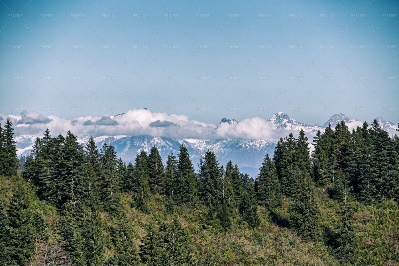 Forest And Snowed Mountain: Stock Photos