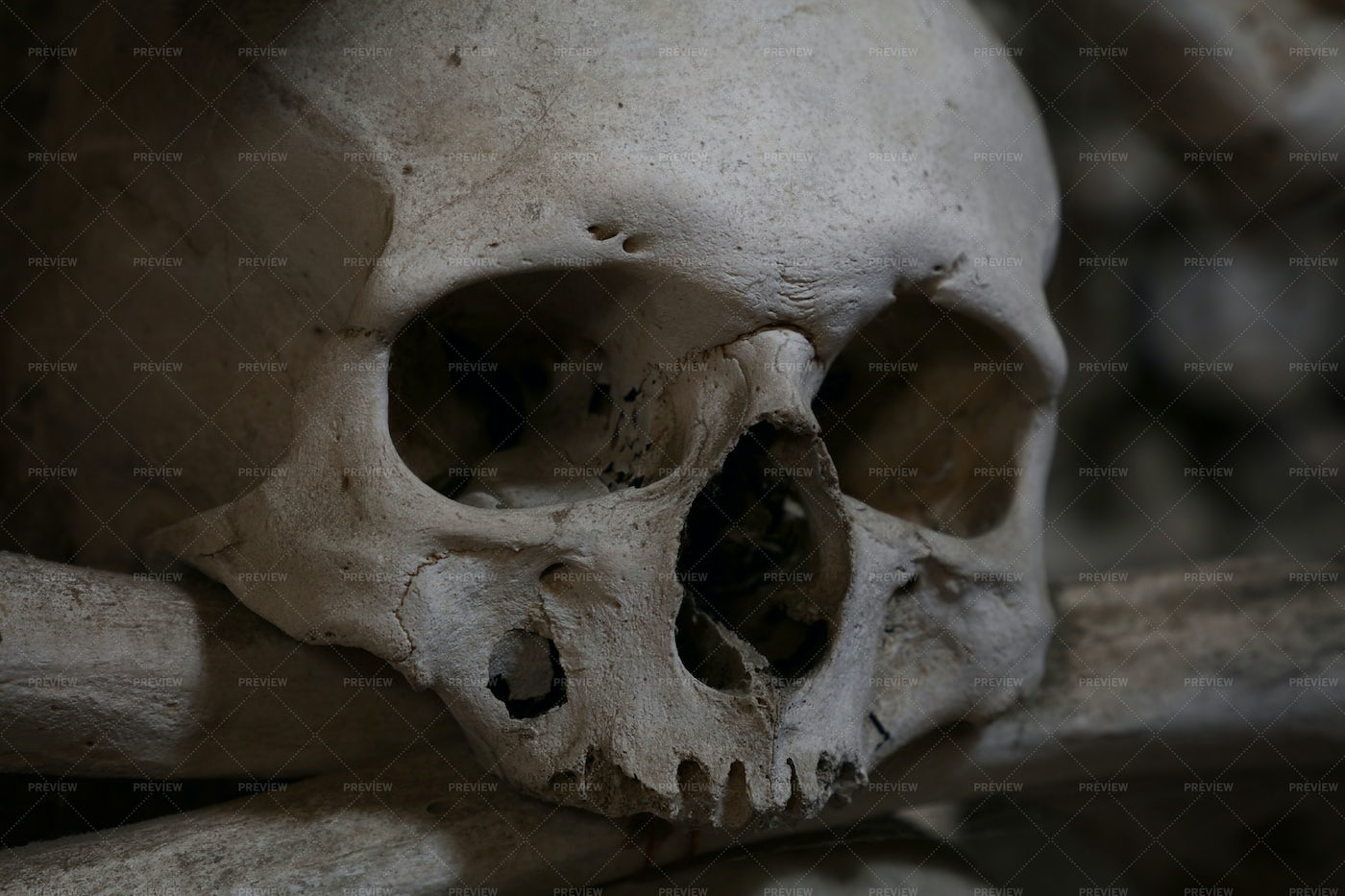 Human Skull And Bones: Stock Photos