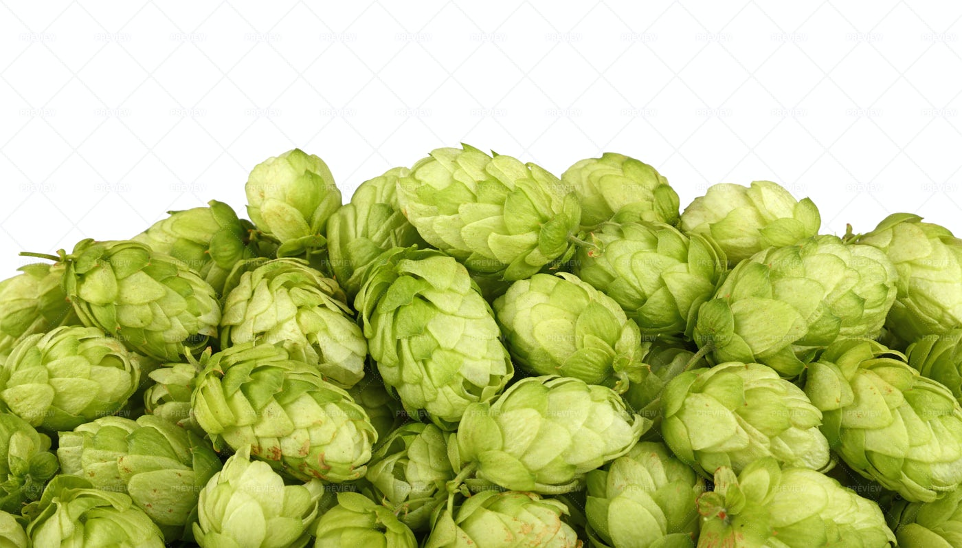 Heap Of Green Hops: Stock Photos