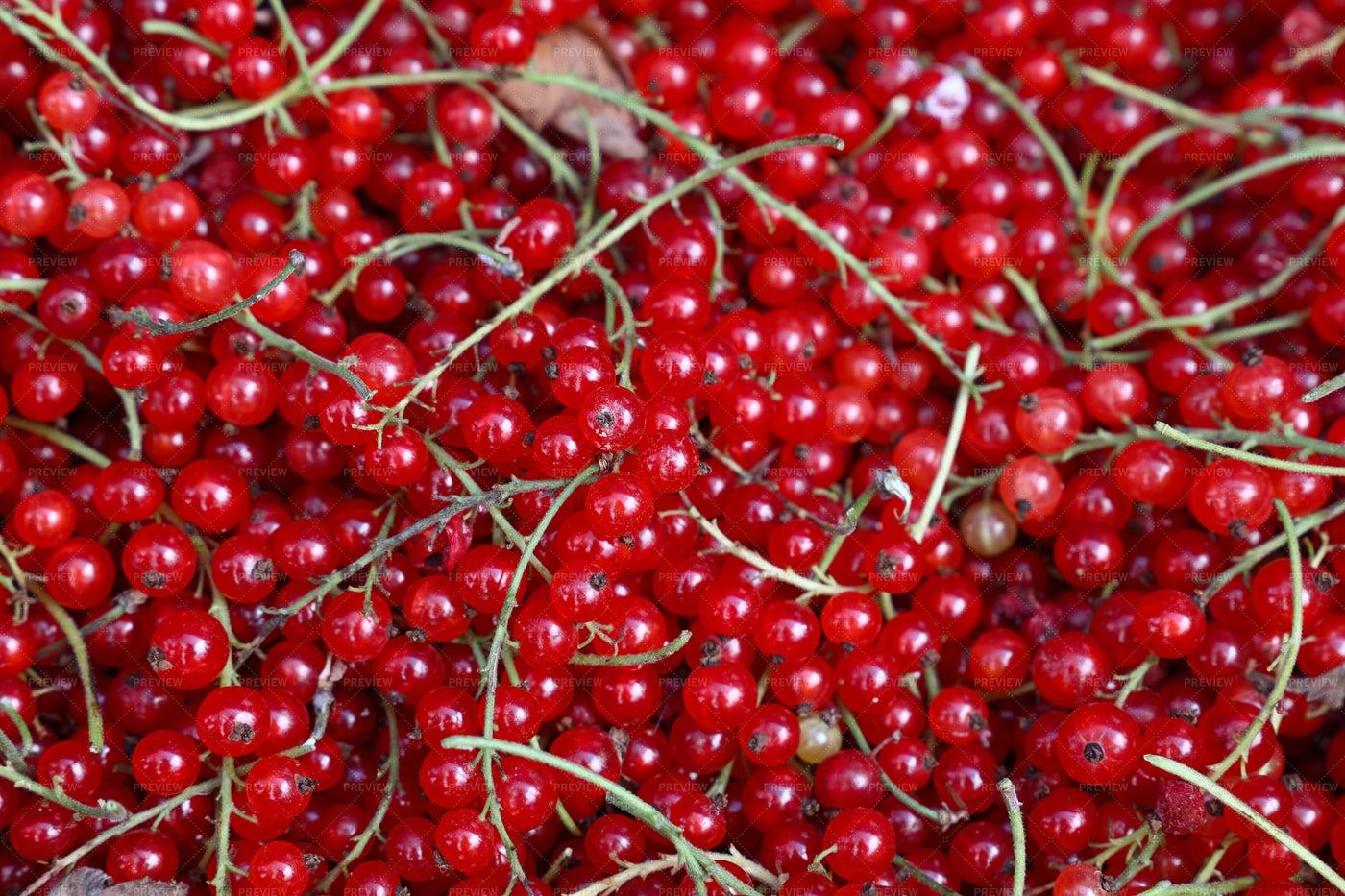 Redcurrant Berries: Stock Photos