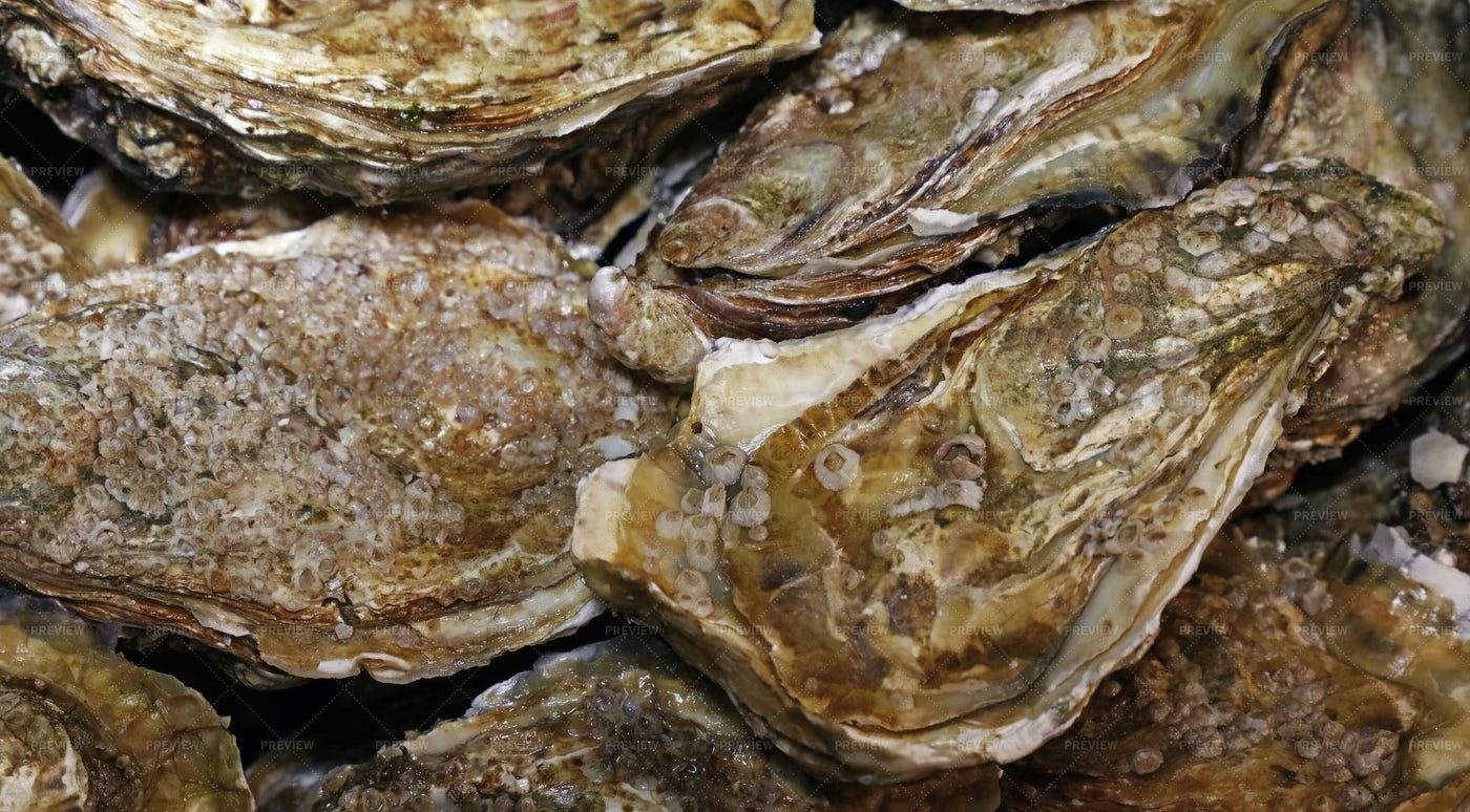 Oysters: Stock Photos