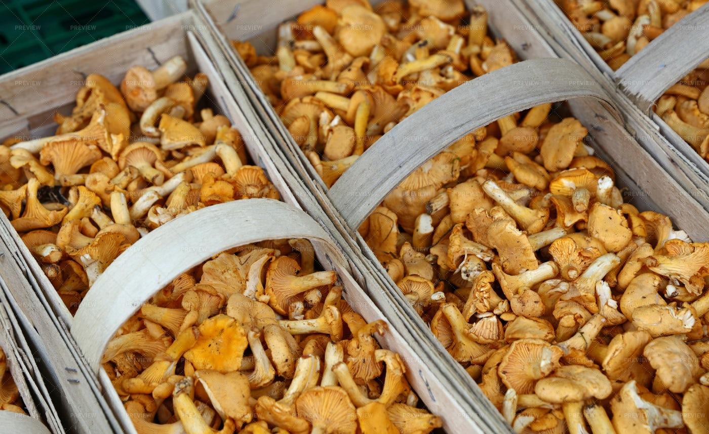 Chanterelle Edible Mushrooms: Stock Photos