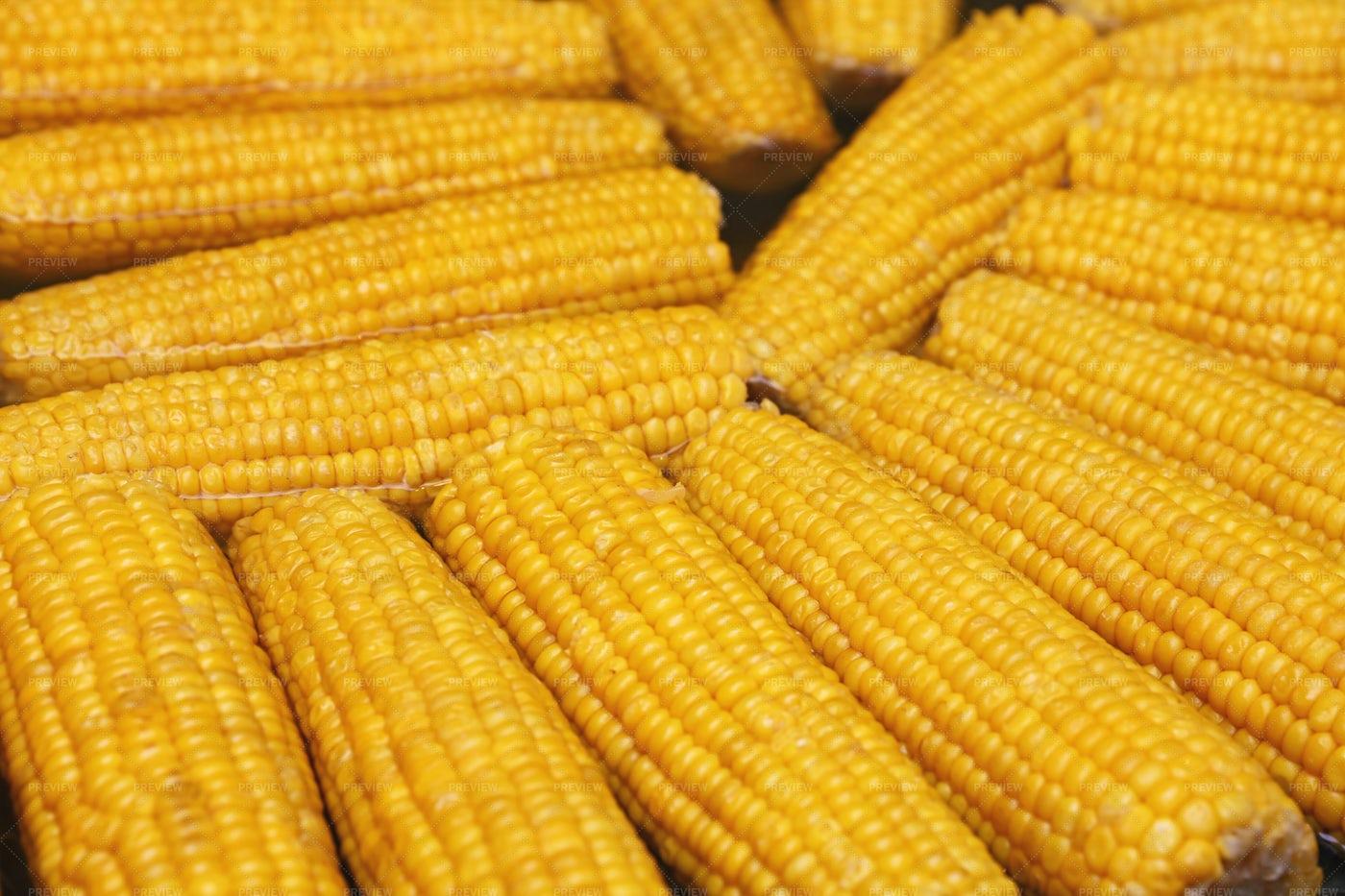 Boiling Fresh Corncobs: Stock Photos