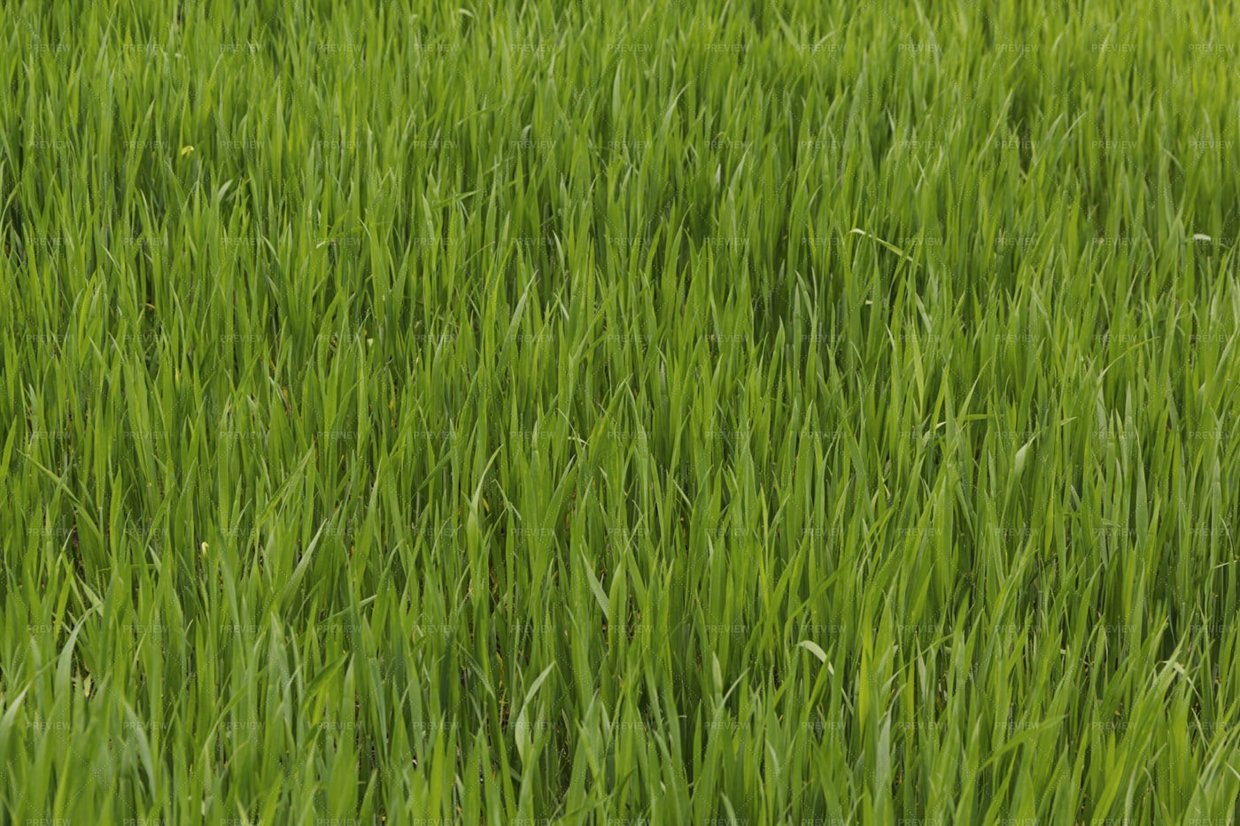 Green Gras: Stock Photos