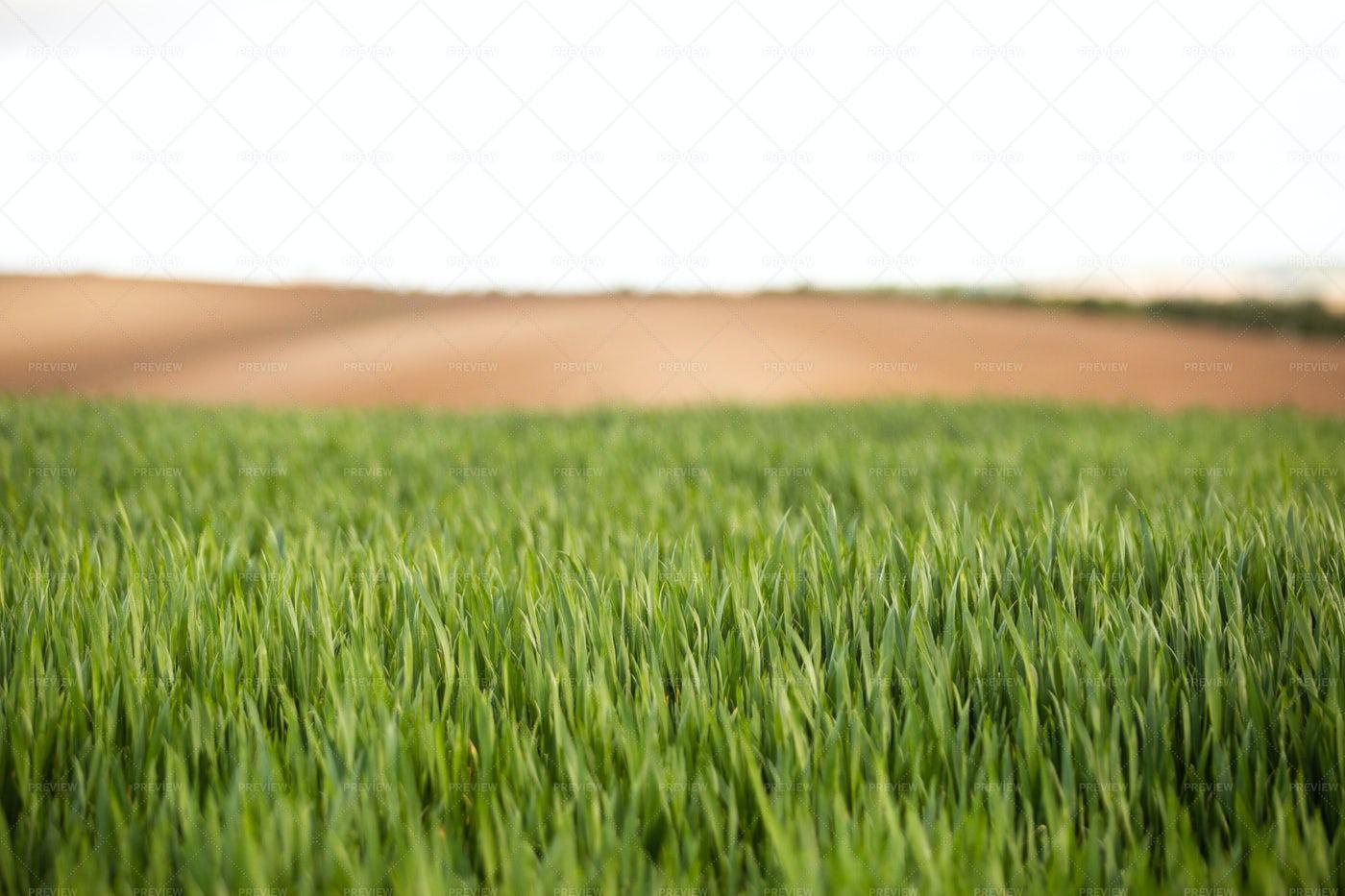 Meadow Of Green Grass: Stock Photos