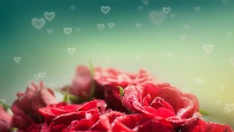 Roses Hearts Backgrounds: Motion Graphics