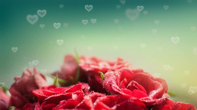 Roses Hearts Backgrounds: Stock Motion Graphics