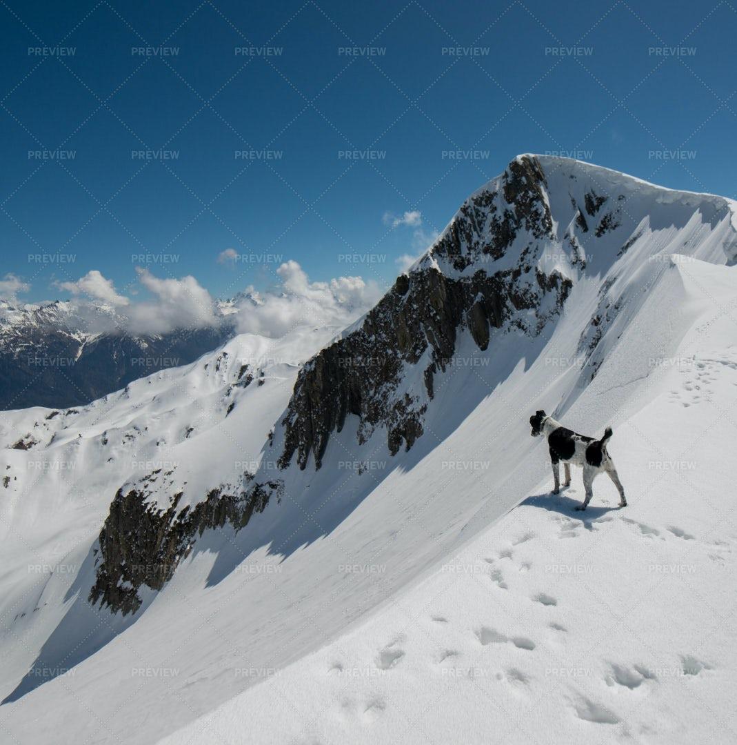 Dog On The Mountain: Stock Photos