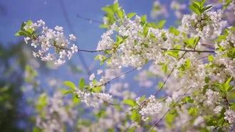 Springtime: Stock Video