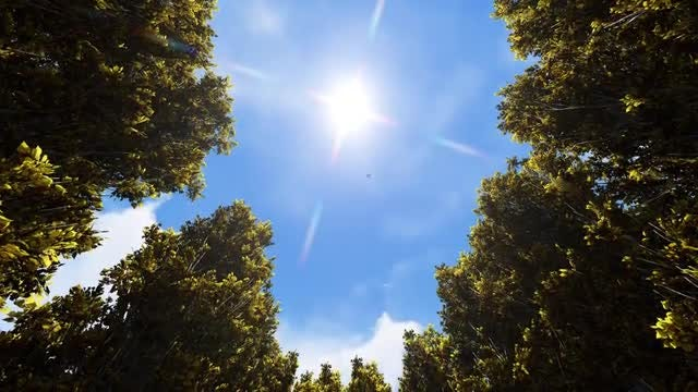 The Sun With Trees: Stock Motion Graphics