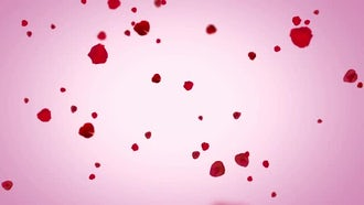 Rose Petals: Motion Graphics