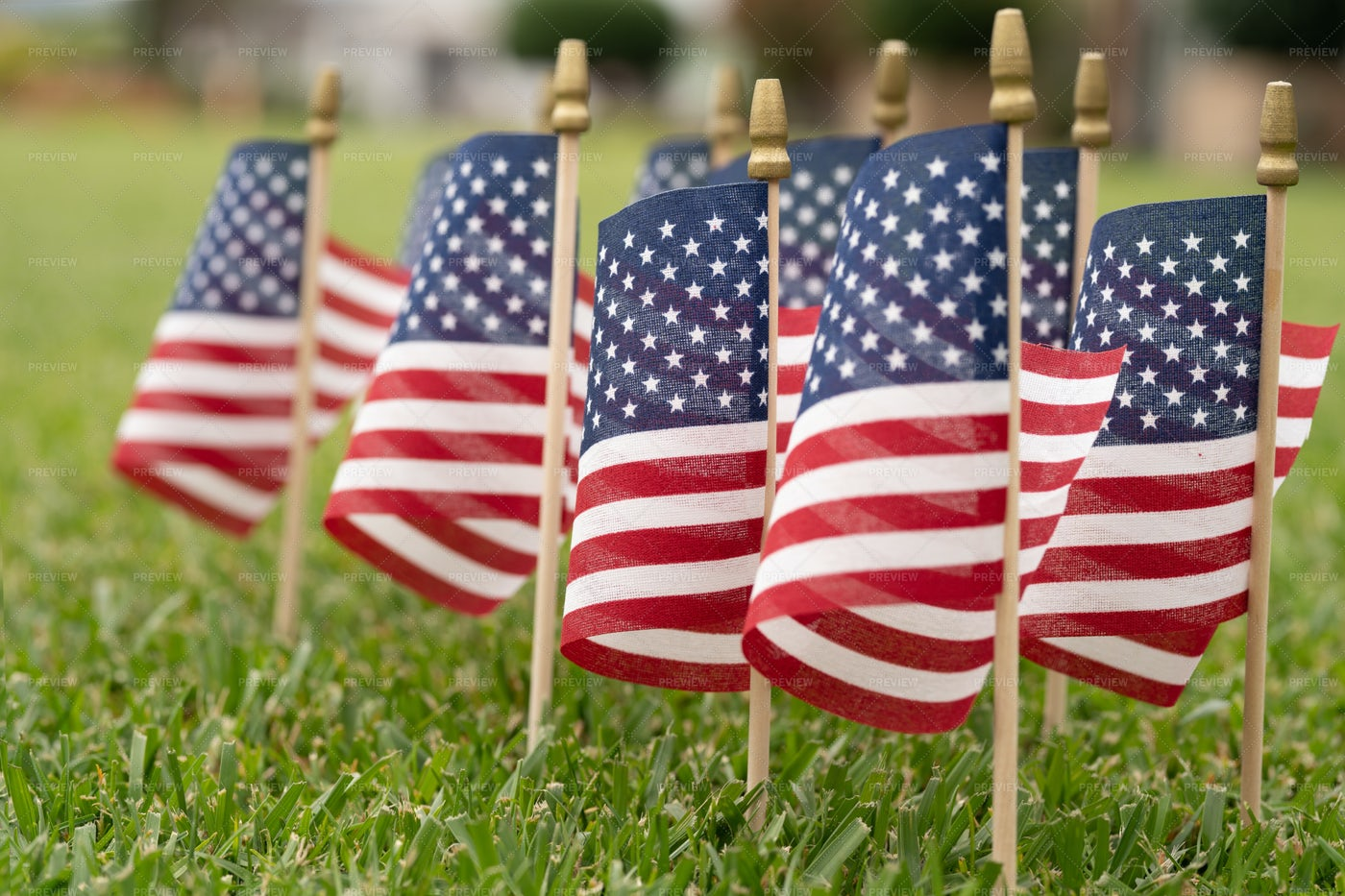 American Flags On Grass: Stock Photos
