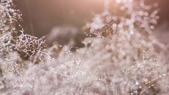Morning Dew Drops: Stock Footage