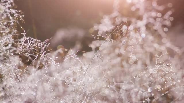 Morning Dew Drops: Stock Video