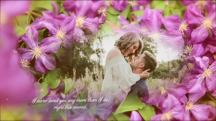 The Violet Garden Gallery: After Effects Templates