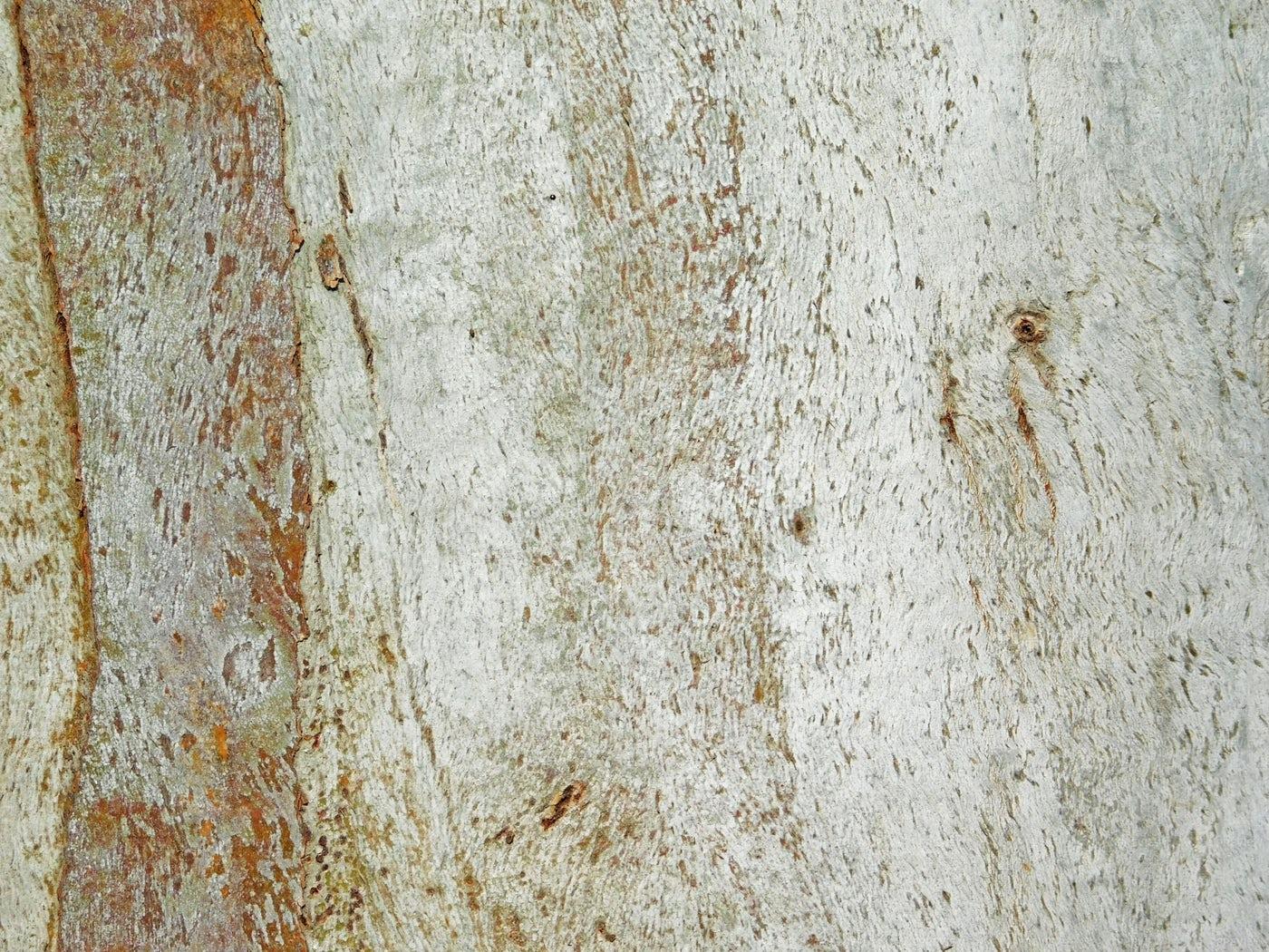 A White Tree Trunk: Stock Photos