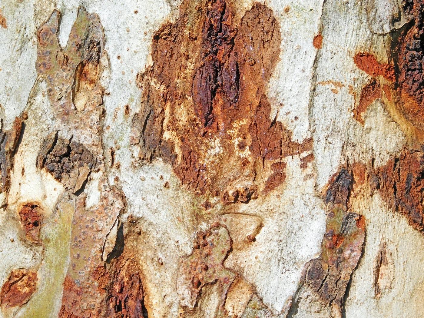 Tree Trunk Close-Up: Stock Photos