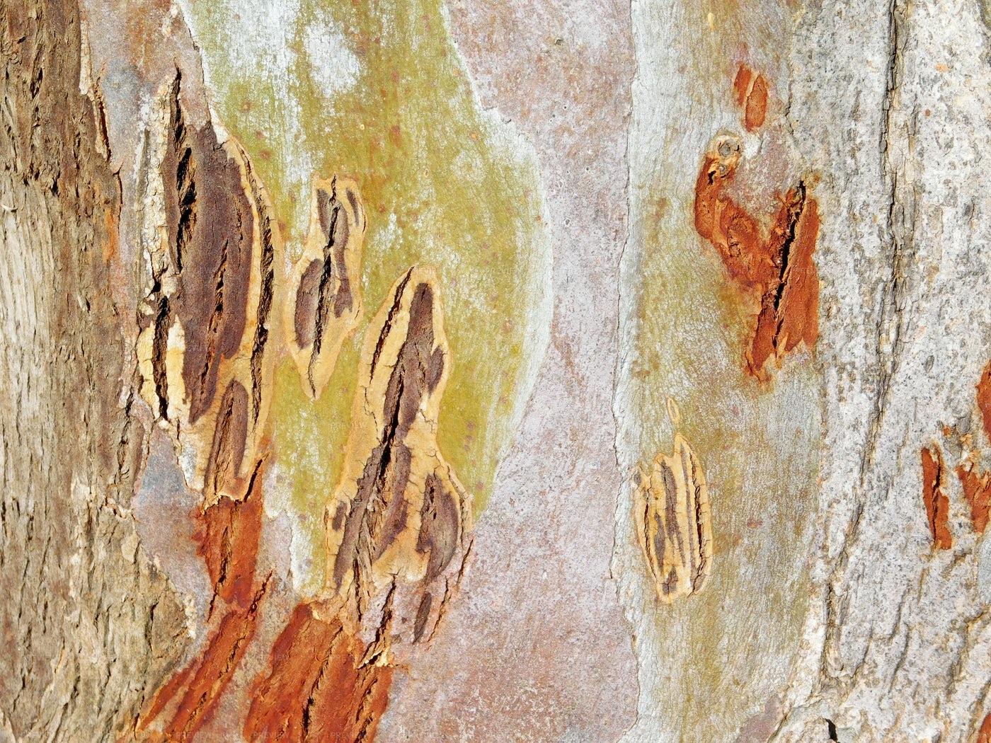Tree Trunk Textures: Stock Photos