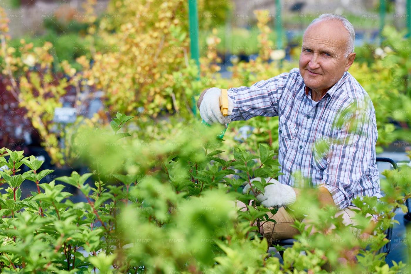 Smiling Senior Man Working In...: Stock Photos