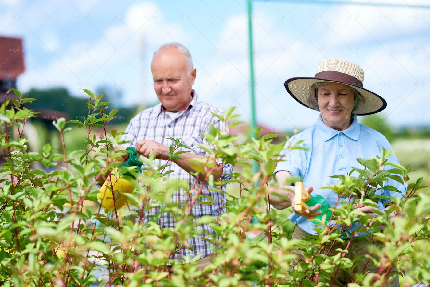 Couple Of Senior Farmers Working In...: Stock Photos