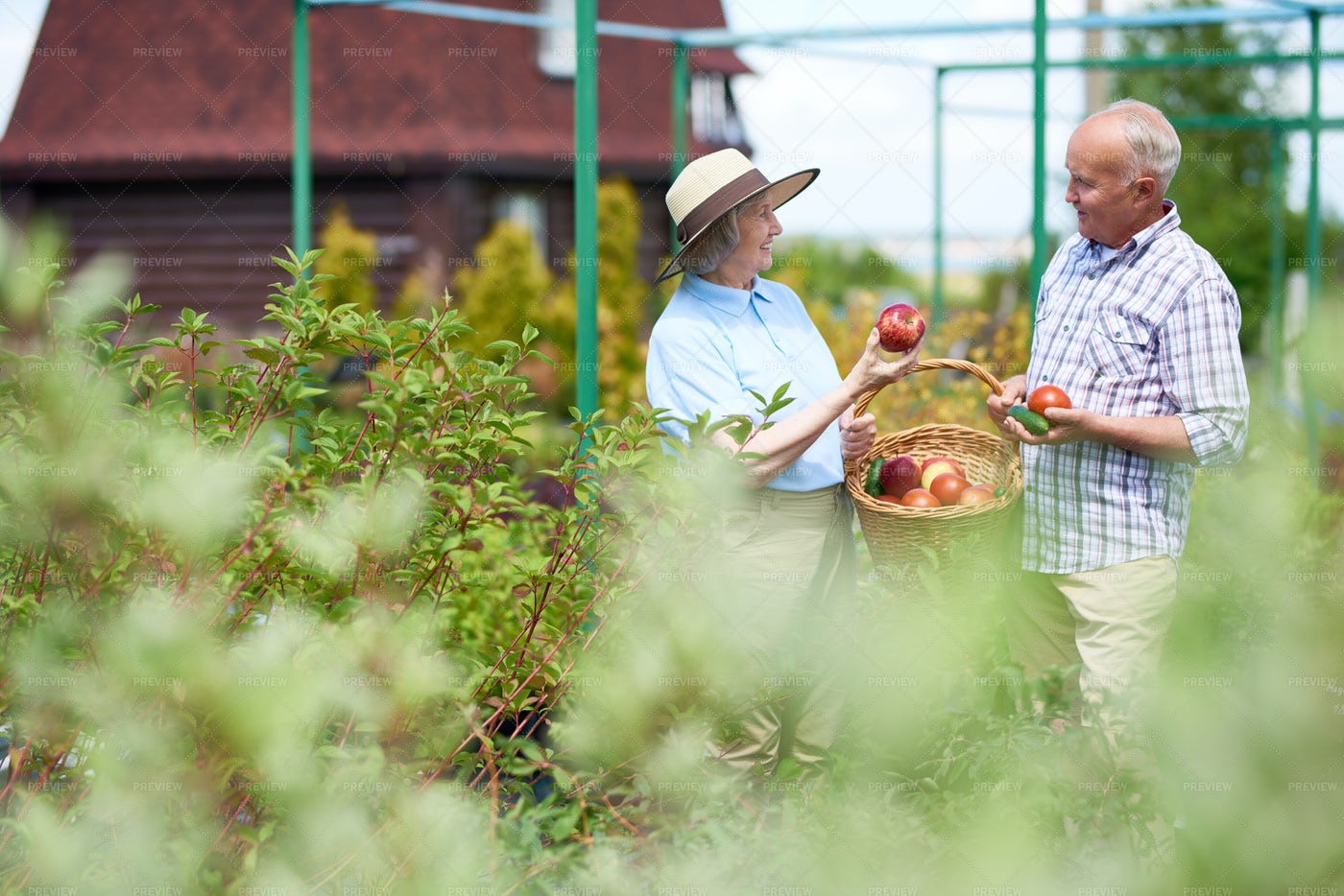 Senior Couple Harvesting Fruits And...: Stock Photos