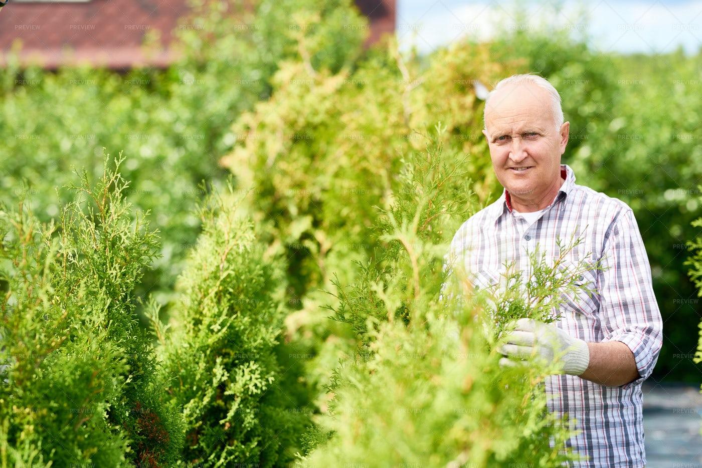 Nice Old Man Working In Garden: Stock Photos