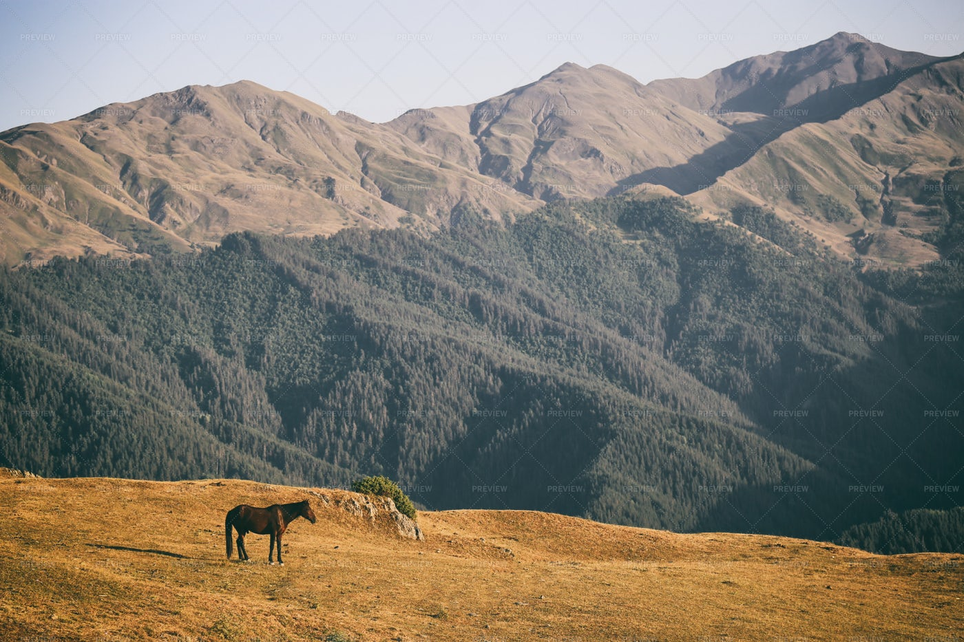 Horse In Nature: Stock Photos