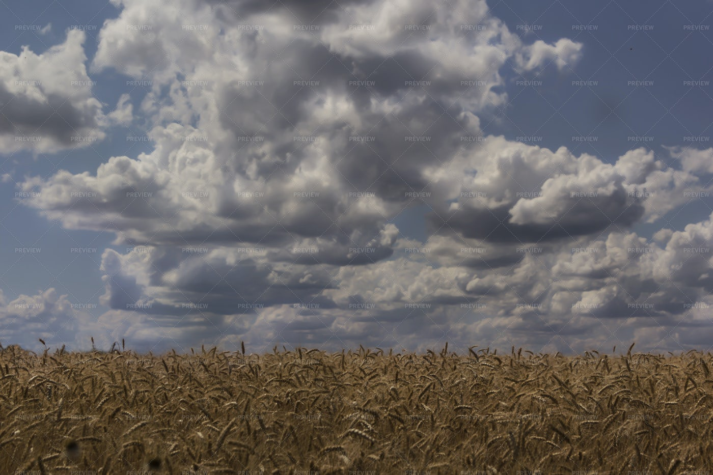 Wheat Field Under Clouds: Stock Photos