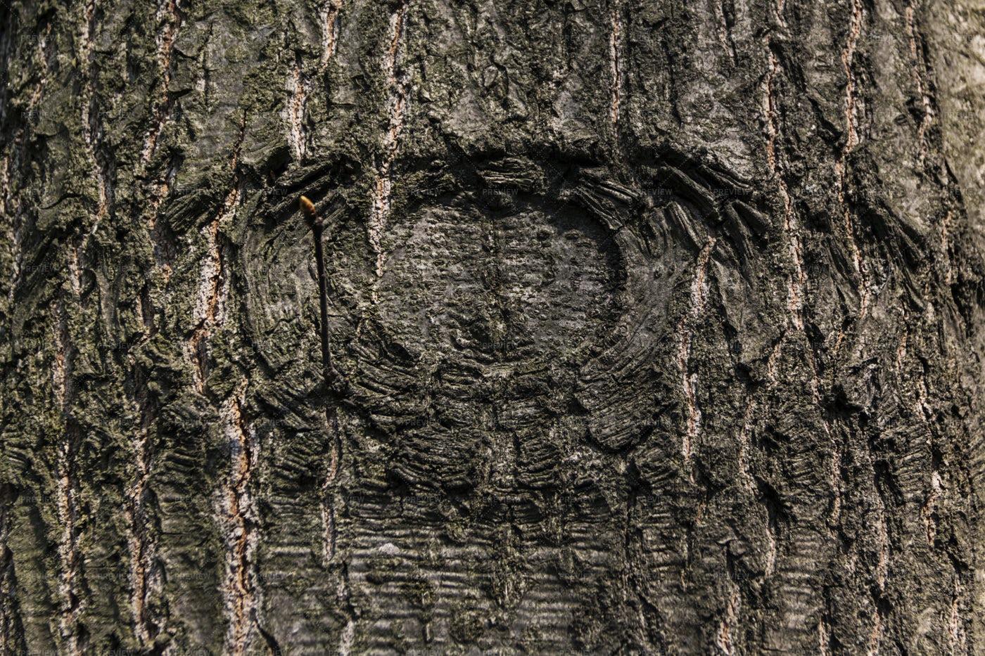 Eye Tree Bark: Stock Photos