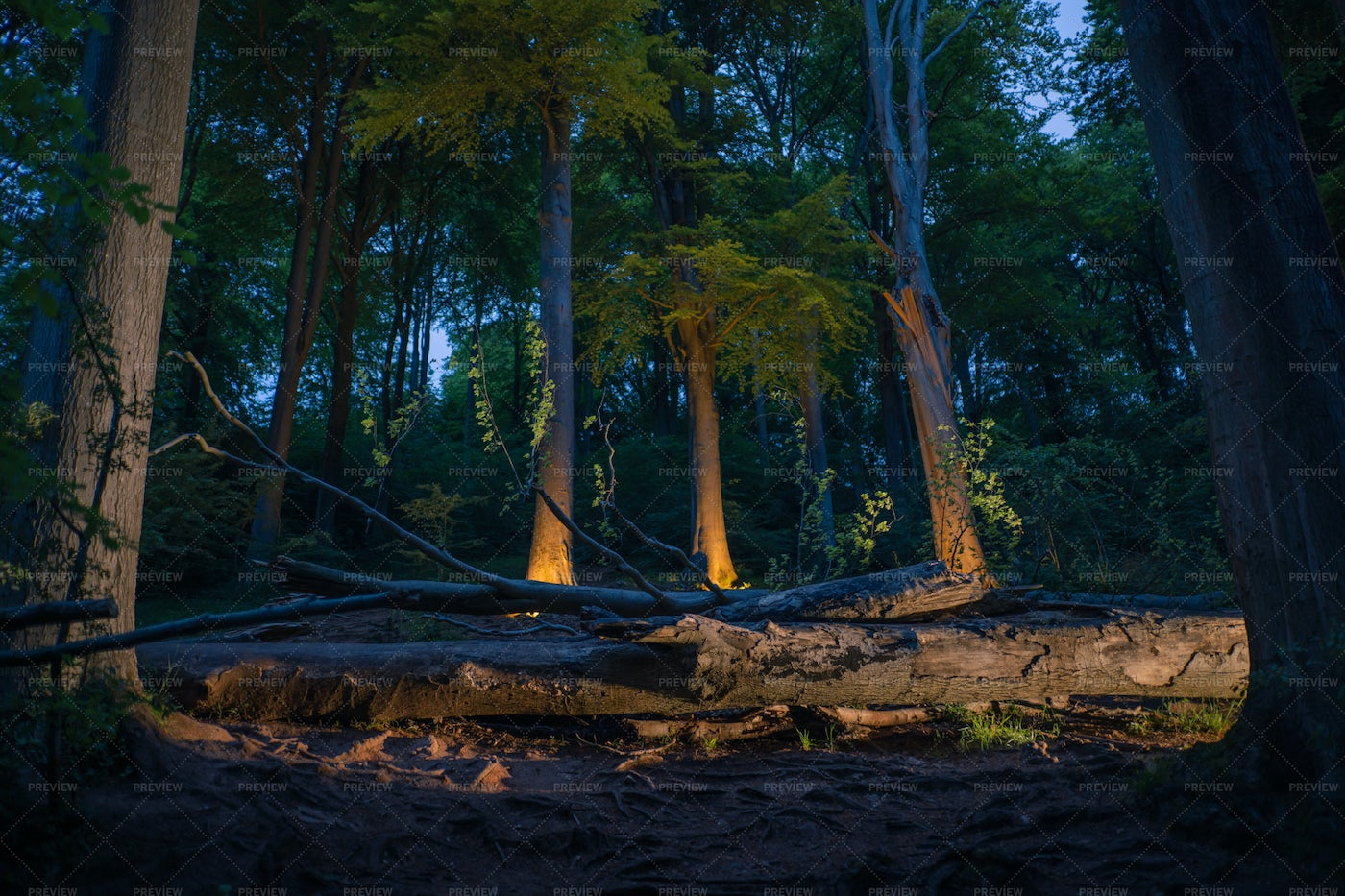 Forest At Night: Stock Photos