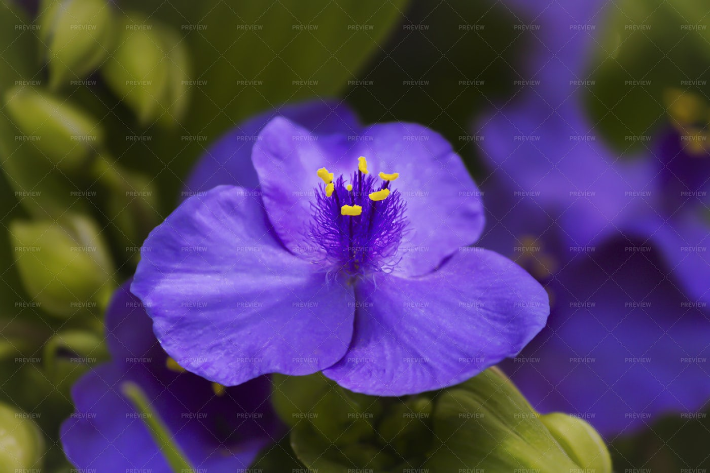 A Blooming Purple Flower: Stock Photos