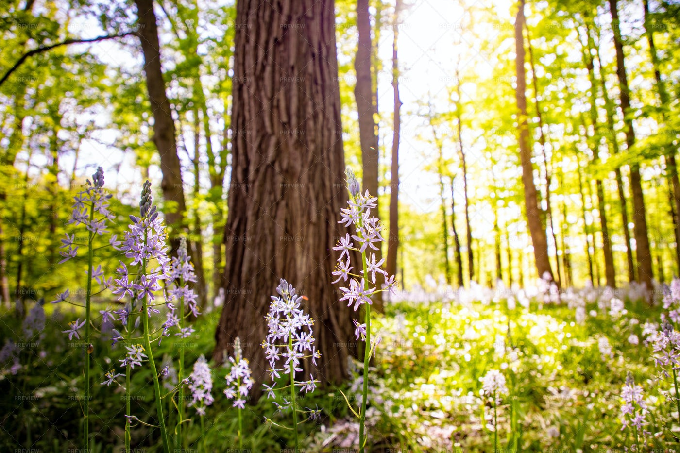 Flowers By A Tree: Stock Photos