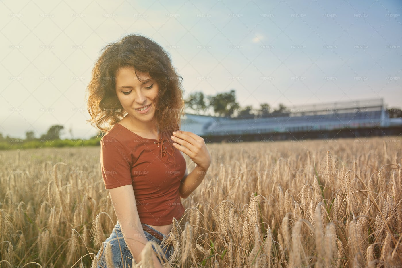 Standing In Wheat Field: Stock Photos