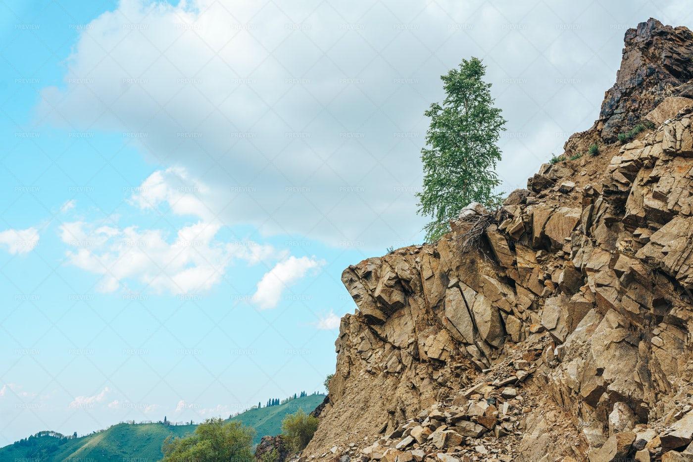Tree On A Rock: Stock Photos
