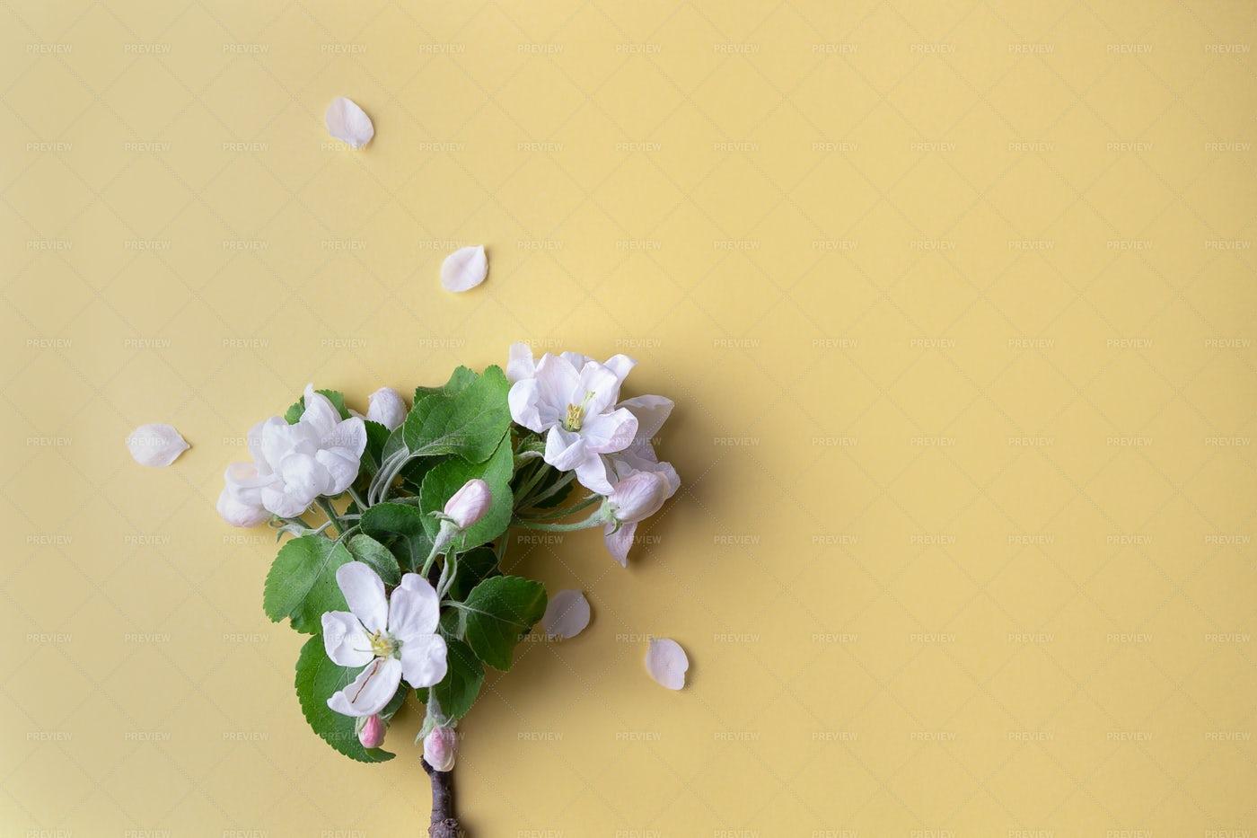 Sprig Of An Apple Tree: Stock Photos