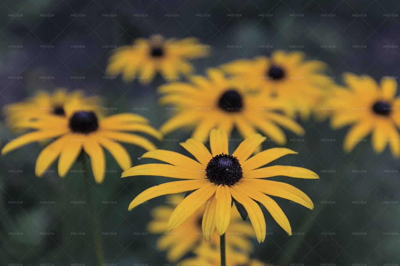 Summer Flowers: Stock Photos