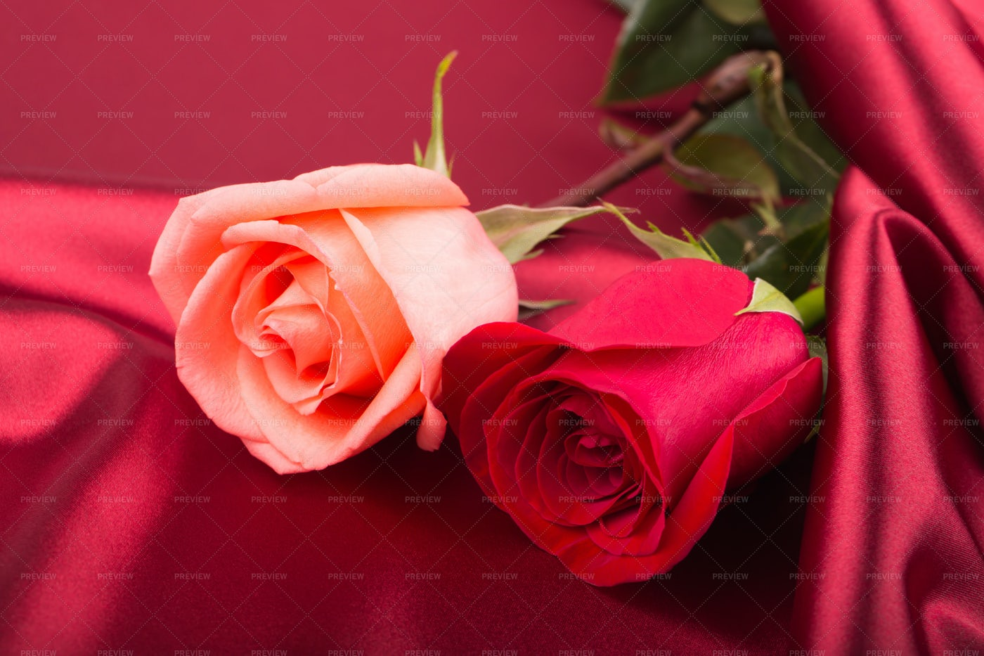 Red And Pink Roses: Stock Photos