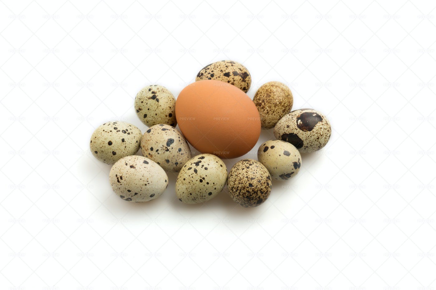 Different Types Of Eggs: Stock Photos