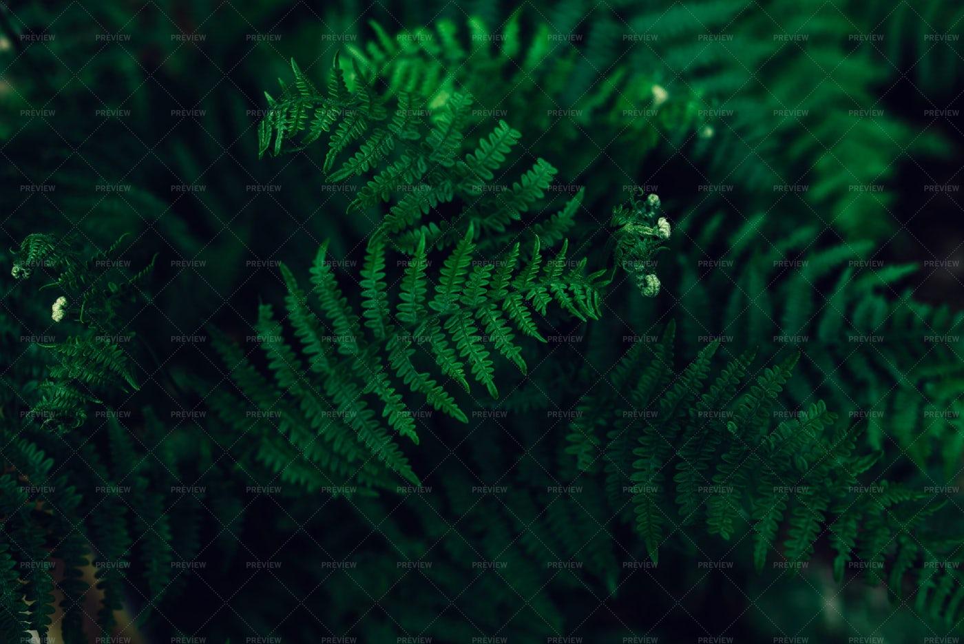 Ferns In Shadow: Stock Photos