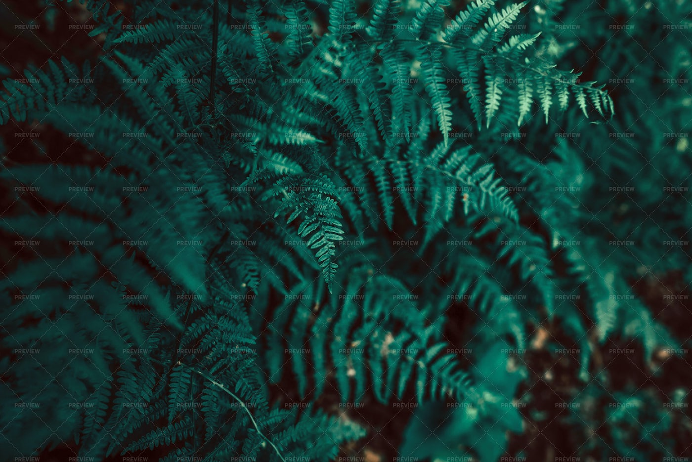 Growing Ferns In The Forest: Stock Photos