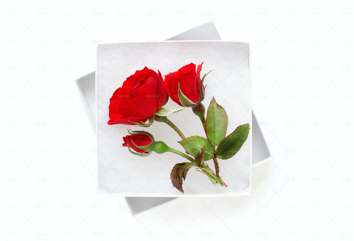 Roses In A White Gift Box: Stock Photos