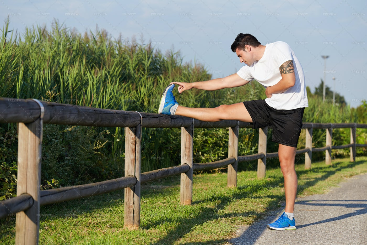 Stretching On A Fence: Stock Photos