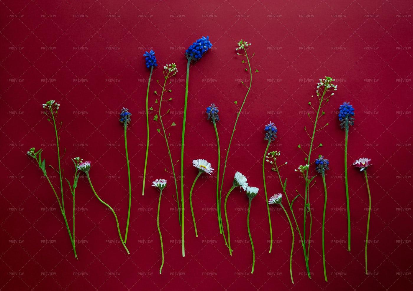 Arrangement Of Spring Flowers: Stock Photos