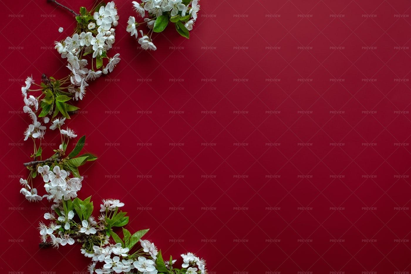 Arrangement Of Cherry Tree Blossoms: Stock Photos