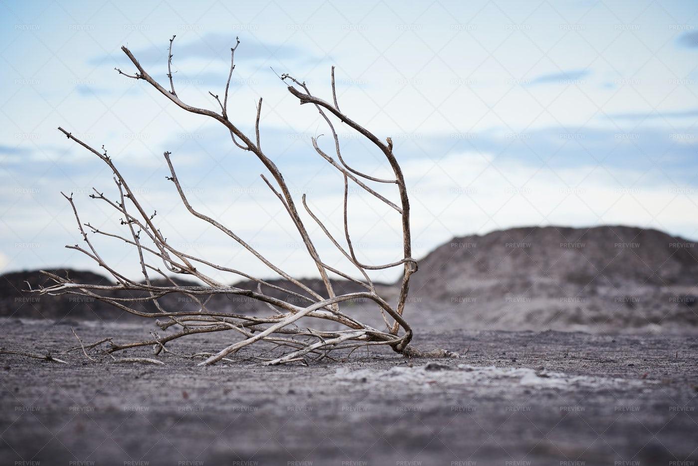 Dead Tree In Arid Soil: Stock Photos