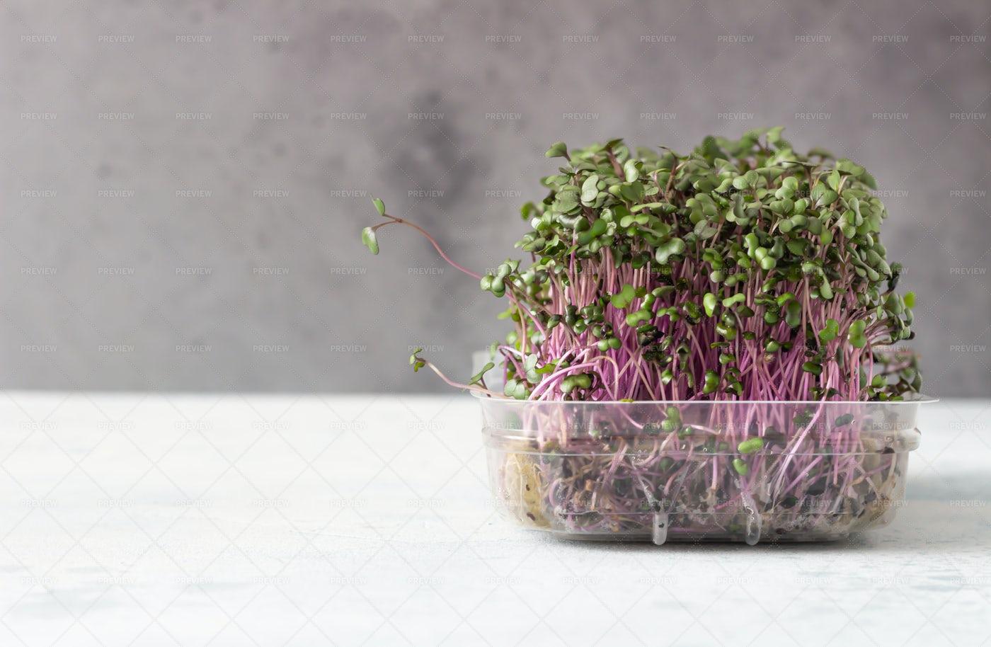 Microgreens: Stock Photos