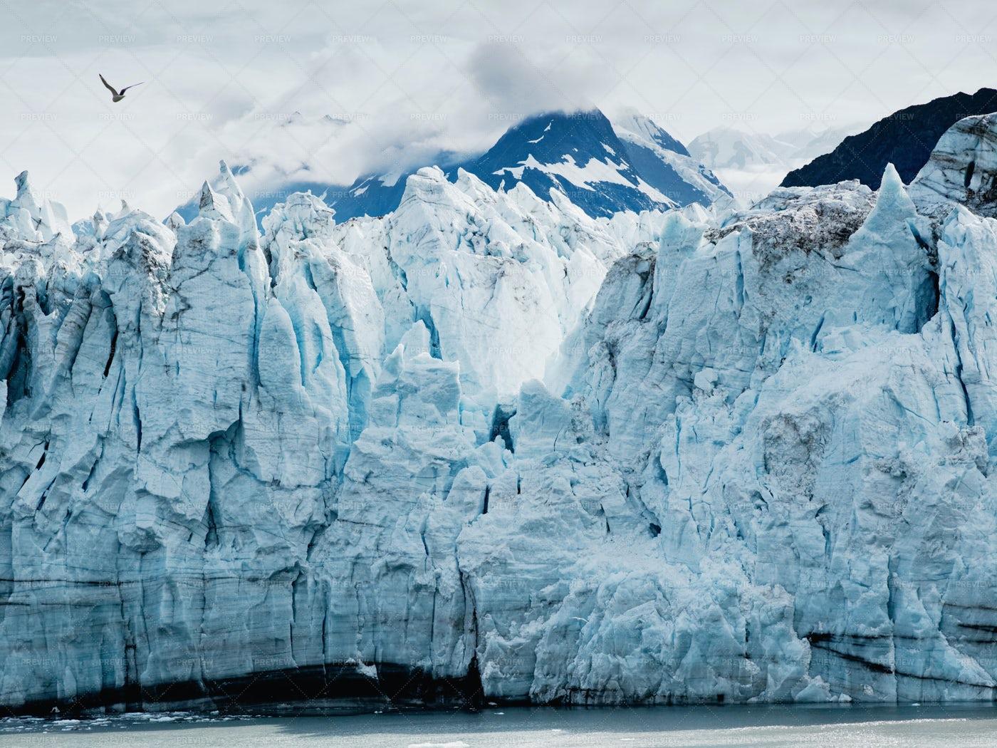 Margerie Glacier At Glacier Bay: Stock Photos