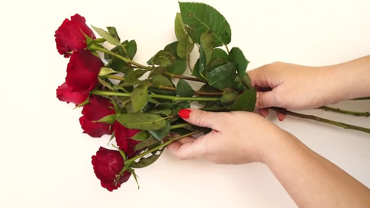 Bouquet Of Red Roses: Stock Video